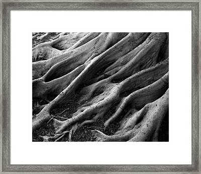 Deep Roots Framed Print by David April