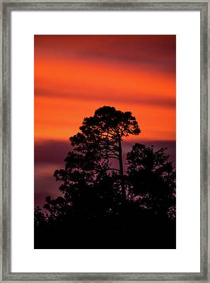 Deep Silhouettes Framed Print by Shelby Young