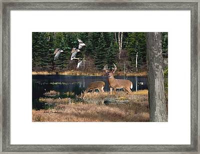 Deer Art- Deer Lake Framed Print by Dale Kunkel Art