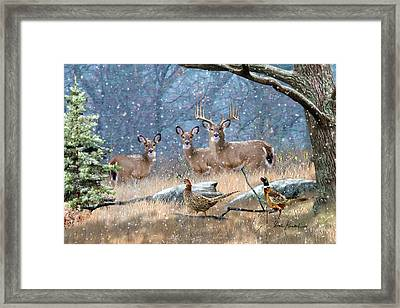 Deer Art - First Snow Framed Print by Dale Kunkel Art