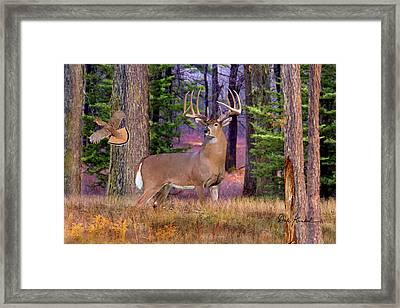 Deer Art - Northwoods Whitetails Framed Print by Dale Kunkel Art