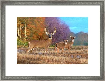 Deer Art - Perfect Ten - Whitetail Deer Art Print Framed Print by Dale Kunkel Art
