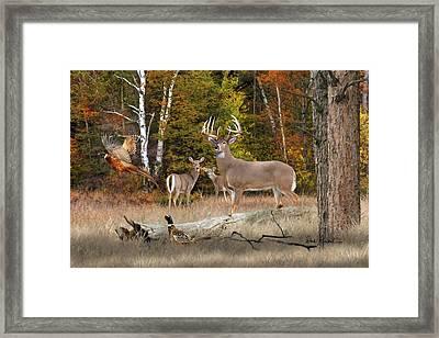 Deer Art - The Guardian Framed Print by Dale Kunkel Art