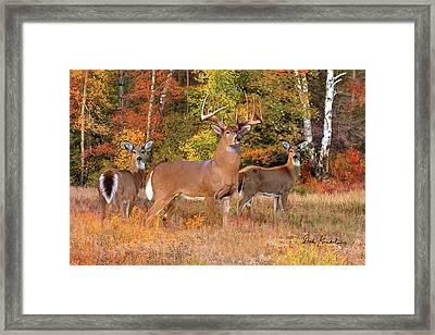 Deer Art - The Record Breaker Framed Print by Dale Kunkel Art