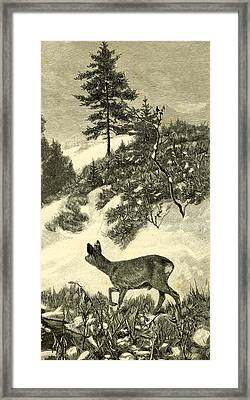 Deer Framed Print by Austrian School