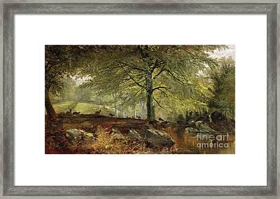 Deer In A Wood Framed Print by Joseph Adam