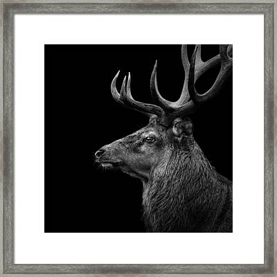 Deer In Black And White Framed Print by Lukas Holas
