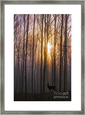 Deer In The Forest At Sunrise Framed Print by Diane Diederich