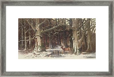 Deer In The Forest Framed Print by G Schneyder