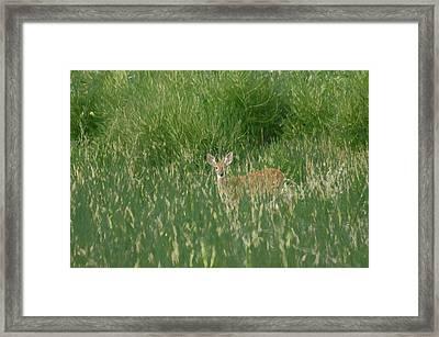 Deer In The Grass Framed Print by Ernie Echols