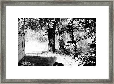 Deer In The Woods Of Dutch Flat Framed Print by Peggy Leyva Conley