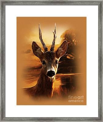 Deer Portrait Framed Print by Gull G