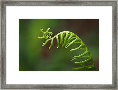 Delicate Fern Frond Spiral Framed Print by Rona Black