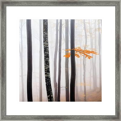 Delicate Forest Framed Print by Evgeni Dinev