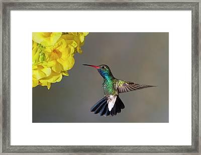 Delicate Framed Print by Janet Fikar