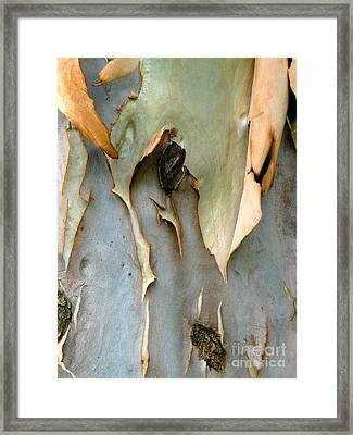 Delicate Poetry Framed Print by Donna McLarty