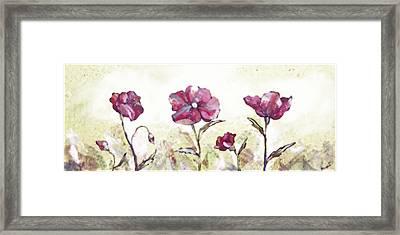 Delicate Poppy II Framed Print by Shadia Zayed