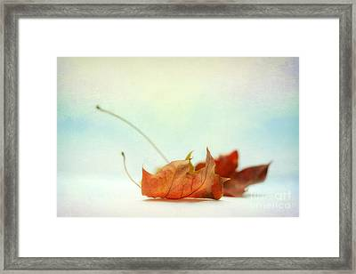 Delicate Shining Leaf Framed Print by SK Pfphotography