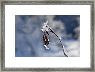 Delicate Winter Framed Print by Mike  Dawson