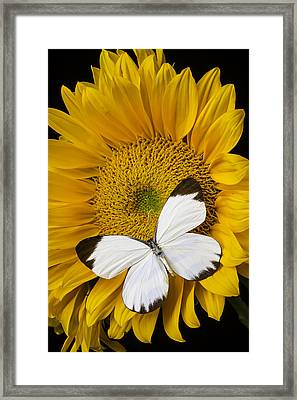 Delightful White Butterfly Framed Print by Garry Gay