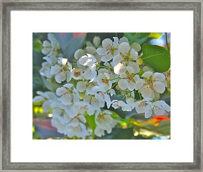 Delightfully White Framed Print by Gwyn Newcombe