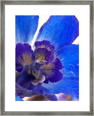 Delphinium Framed Print by Lauren Radke