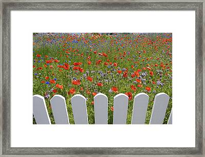 Denmark, Skagen, Garden Of Red Poppies Framed Print by Keenpress