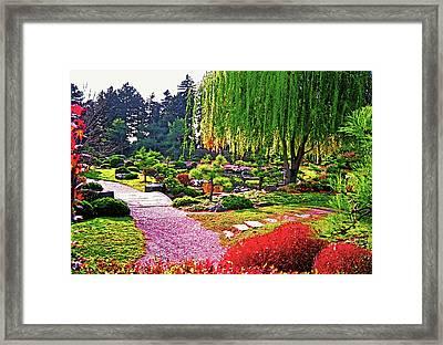 Denver Botanical Gardens 1 Framed Print by Steve Ohlsen