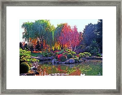 Denver Botanical Gardens 3 Framed Print by Steve Ohlsen