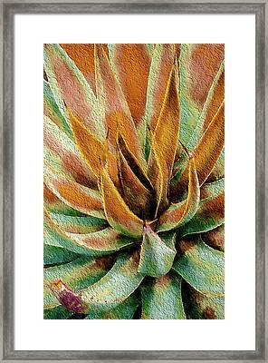 Desert Agave Framed Print by Julie Palencia