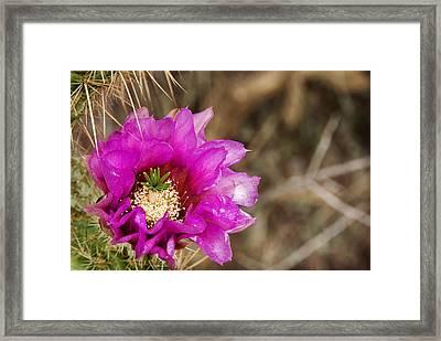 Desert Bloom Framed Print by Anthony Citro