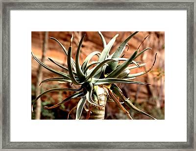 Desert Drama Framed Print by Karen M Scovill