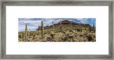 Desert Dreams Framed Print by Chuck Brown