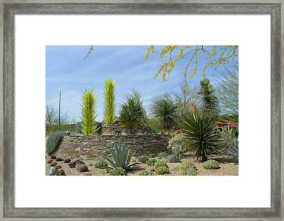 Desert Garden Framed Print by Aimee L Maher Photography and Art Visit ALMGallerydotcom