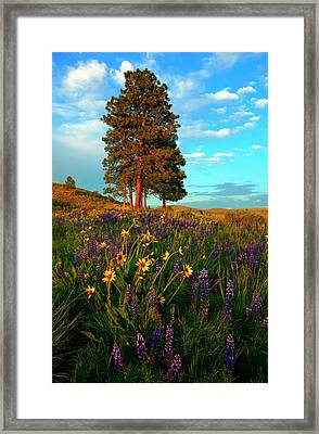 Desert Pines Meadow Framed Print by Mike  Dawson