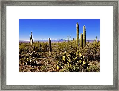 Desert Spring Framed Print by Chad Dutson