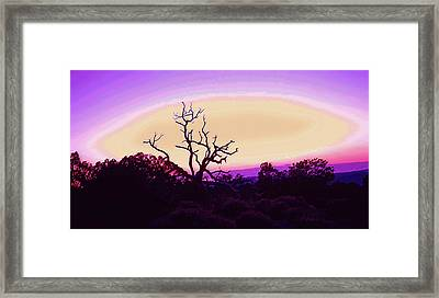 Desert Sunset With Silhouetted Tree 2 Framed Print by Steve Ohlsen