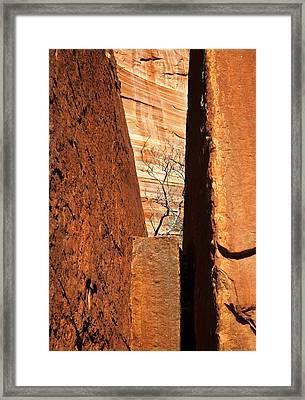 Desert Vise Framed Print by Mike  Dawson