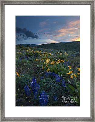 Desert Wildflower Sunset Framed Print by Mike Dawson