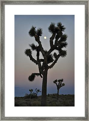 Destiny Framed Print by Skip Hunt