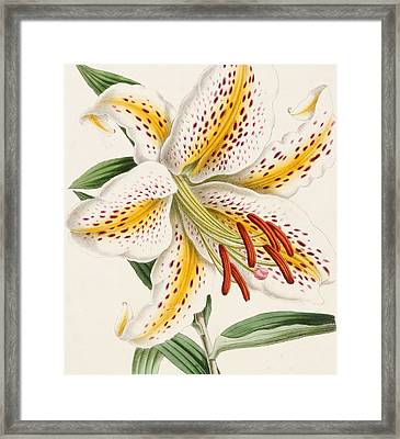 Detail Of A Lily Framed Print by James Andrews