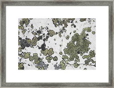 Detail Of Lichen On A White Rock Lake Framed Print by Michael Interisano