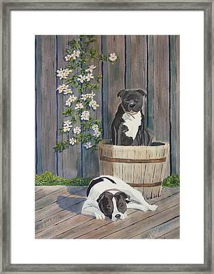 Devilish Duo At Rest Framed Print by Ally Benbrook
