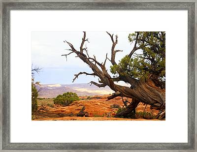 Devils Garden 2 Framed Print by Marty Koch