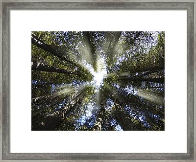 Devoto Grove Framed Print by Leland D Howard