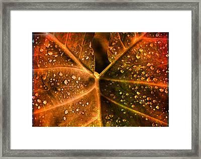 Dew Drops Framed Print by Susanne Van Hulst