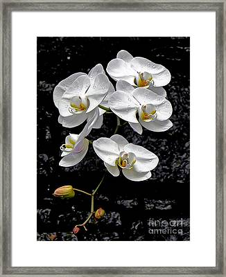 Dew-kissed Cascading Orchids Framed Print by Sue Melvin