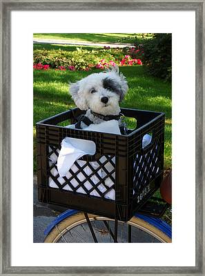 Dexter The Adorable Framed Print by Paul Wash