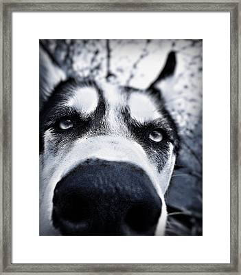 Diabolical Damien  Framed Print by Celestial  Blue
