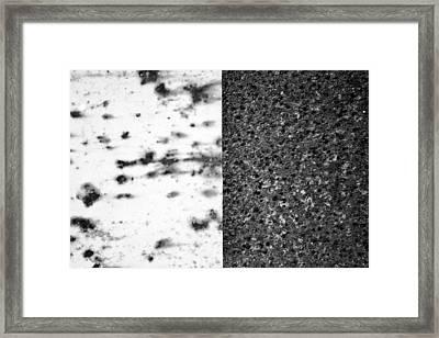 Dichotomy Framed Print by Tom Druin